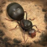 The Ants  Underground Kingdom MOD APK android 1.0.12