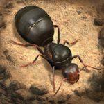 The Ants Underground Kingdom MOD APK android 1.8.0